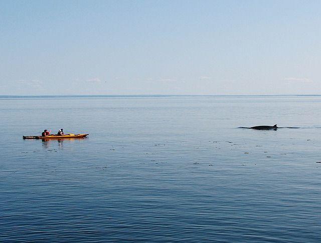 Portland Whale Watching